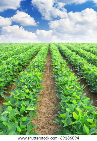 Agricultural plants on field with cloud - stock photo