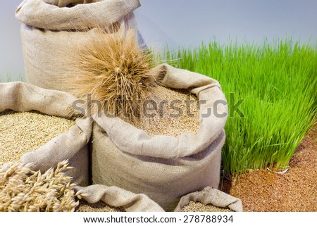 Agricultural product assortment, cereals in sacks on wheat field  - stock photo
