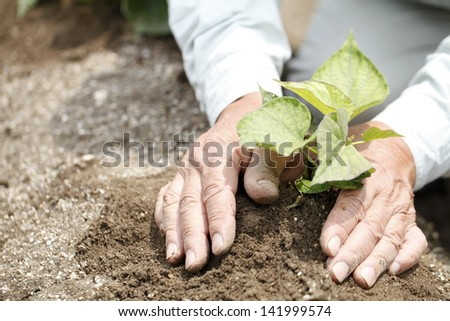 Agricultural research veteran - stock photo