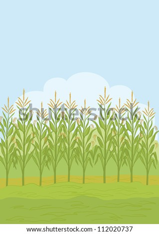 Agricultural rural landscape, field with green maize