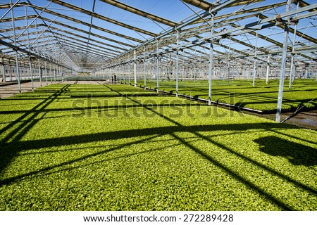 Agricultural structure for growing and watering crops, this is cilantro - stock photo