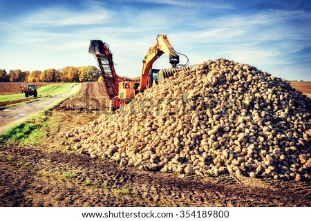 Agricultural vehicle harvesting sugar beets - stock photo