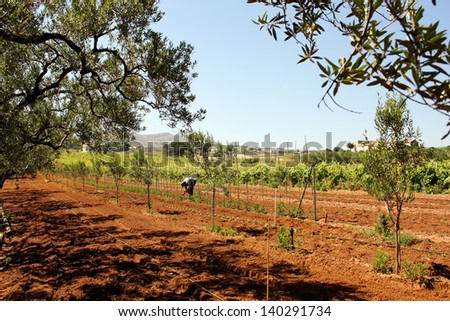 Agriculture and farmer - stock photo