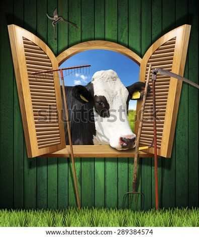 Agriculture and Livestock Concept with Open Window / Wooden wall with old farm tools and an open window with a head of cow. - stock photo