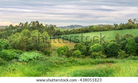 Agriculture and nature on summer afternoon in Minas Gerais, Brazil