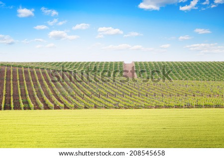 Agriculture and vineyard meadow. Composition of nature. - stock photo