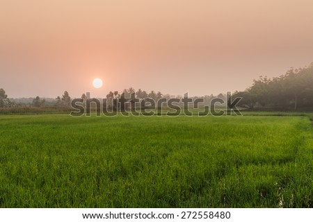 agriculture area with sunrise in countryside morning - stock photo