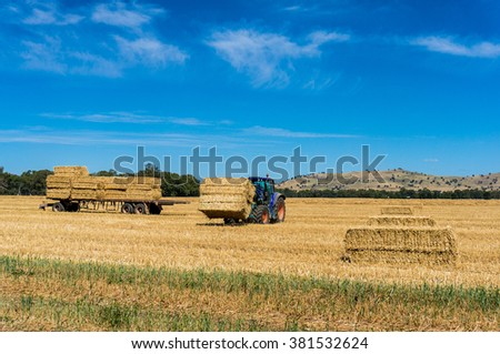 Agriculture Australian scene. Tractor stacking hay bales on trailer. Yellow haystacks of straw on a field, agriculture machinery working on Australian outback farm - stock photo