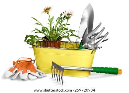 Agriculture, basket, botanical. - stock photo