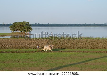 Agriculture by the lake Myanmar