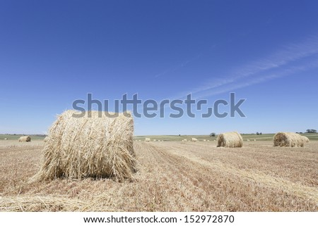 Agriculture. Cereal