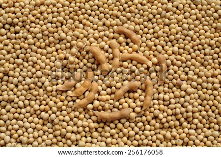 Agriculture, close up photo of soy bean after harvest