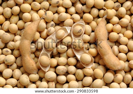 Agriculture, close up photo of soy bean crop after harvest - stock photo