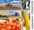 Agriculture - collage, food production, corn cob, wheat harvest, tractor planting, picking tomato, cows, sheeps - stock photo