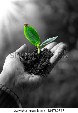 agriculture concept , little plant in hand