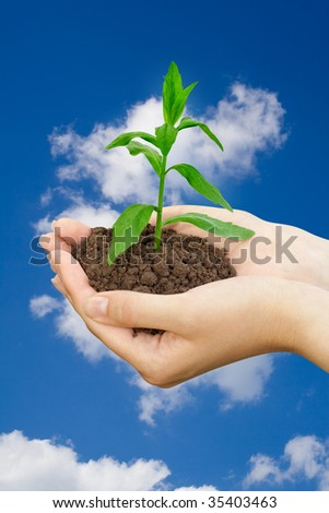 agriculture concept. plant in a hands over blue sky