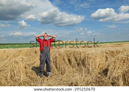 Agriculture, desperate farmer gesturing in damaged wheat  field after storm - stock photo