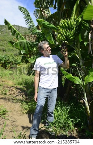 Agriculture: Farmer examining the banana plantation - stock photo