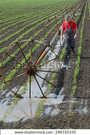 Agriculture, farmer in paprika field with irrigation system - stock photo