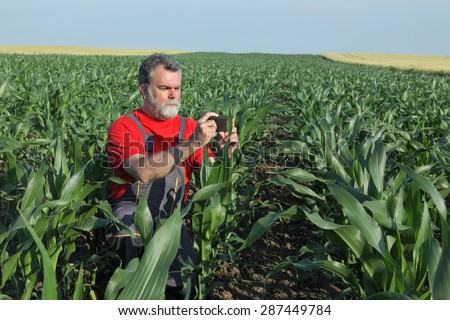 Agriculture, farmer or agronomist photographing corn plant in field - stock photo