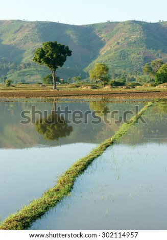 Agriculture field after harvest season, beautiful landscape of nature, flooded farm, tree reflect on water, chain of mountain behind, green countryside of Daklak, Viet Nam