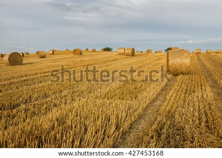 Agriculture , field with straw bales after harvest. - stock photo