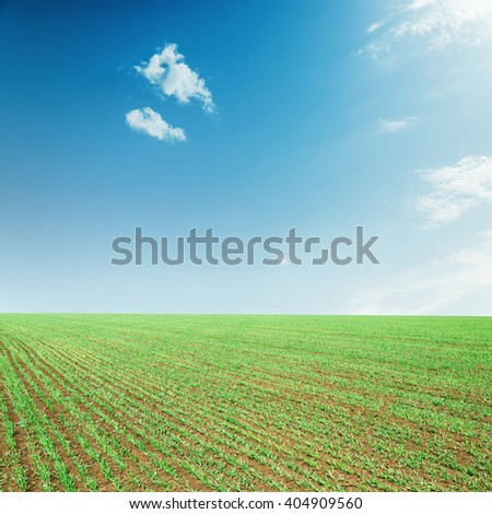 agriculture green spring field and blue sky with clouds over it - stock photo