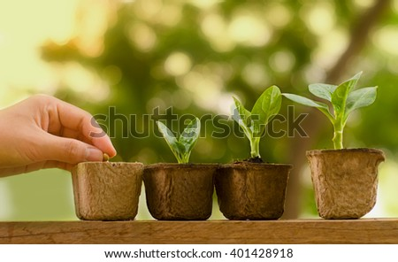 Agriculture growing concept present by farmer hand sowing Seed and plant growing with sunlight