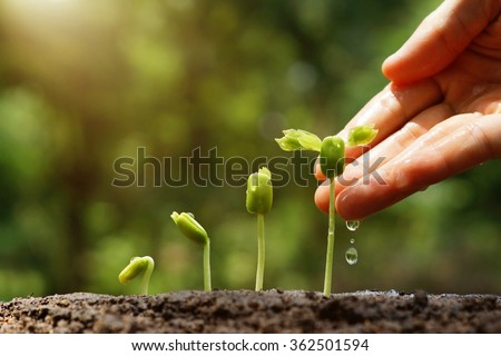 Agriculture. Growing plants. Plant seedling. Hand nurturing and watering young baby plants growing in germination sequence on fertile soil with natural green background                                - stock photo