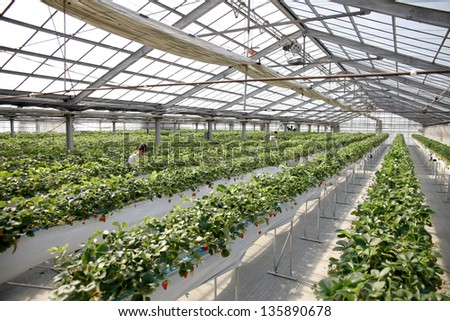 Agriculture in greenhouse - stock photo