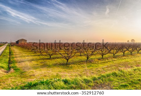 agriculture in winter, cultivated fields, plowed land and rows of dormant orchards in Emilia Romagna, Italy