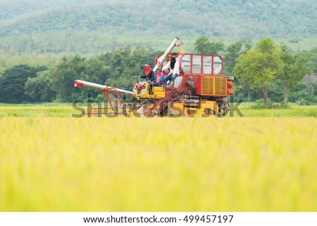 Agriculture Industrial harvesting machinery working in rice