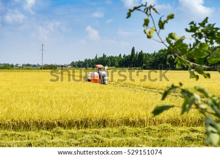 Agriculture Industrial harvesting machinery working in rice field