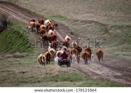 Agriculture: Livestock farming - stock photo