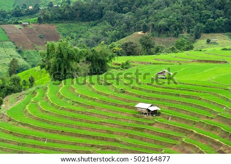 Agriculture on the mountain high In northern Thailand.
