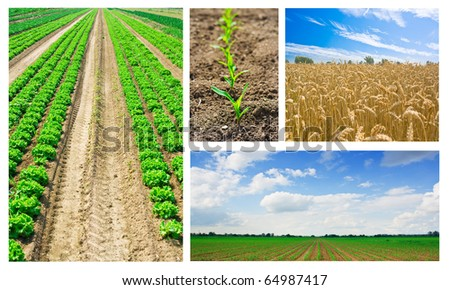Agriculture or harvest collage