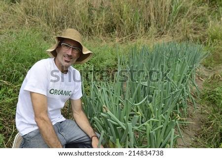 Agriculture: Organic farmer harvesting green onion - stock photo