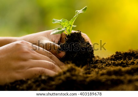Agriculture,Plant,Seed,Seedling,Farmer planting sapling into soil over sunlight in morning time - stock photo