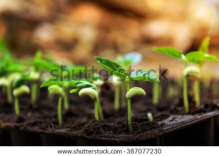 Agriculture, Seeding, Plant seed growing - stock photo