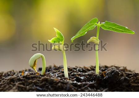 Agriculture, Seeding, Plant seed growing concept - stock photo