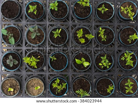 Agriculture, Seeding, Plant seed growing concept. - stock photo