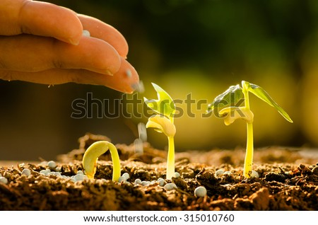 Agriculture, Seeding, Plant seed growing concept, Farmer hand giving fertilizer to young plant