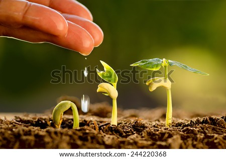 Agriculture , Seeding , Seedling , Male hand watering young tree over green background ,seed planting - stock photo