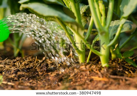 Agriculture,Seeding,Seedling,Watering vegetable over green background,seed planting - stock photo