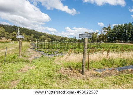 Agriculture Vegetable fields