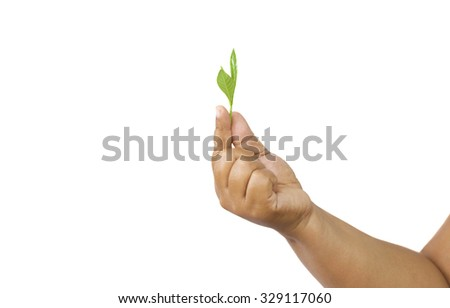 Agriculturist holding fresh leaves in hand in white background