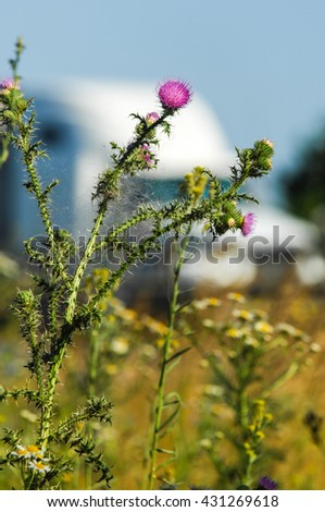 agrimony, bur, burr. a prickly seed case or flower head that clings to animals and clothes. - stock photo