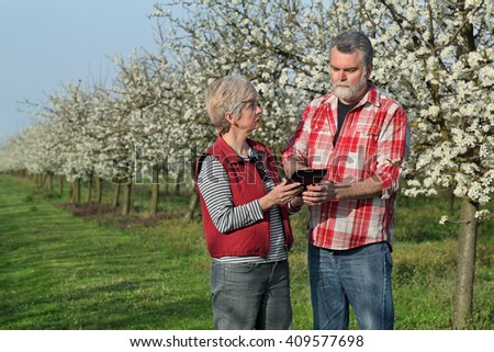 Agronomist and farmer examine blooming plum trees in orchard, using tablet