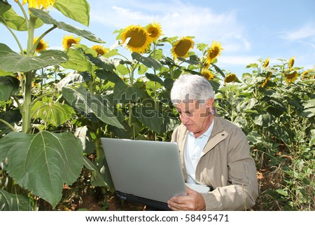 Agronomist in sunflowers field with laptop computer - stock photo