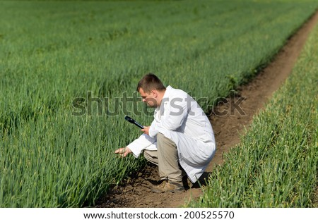 Agronomist in white coat looking through magnifier in onion field - stock photo